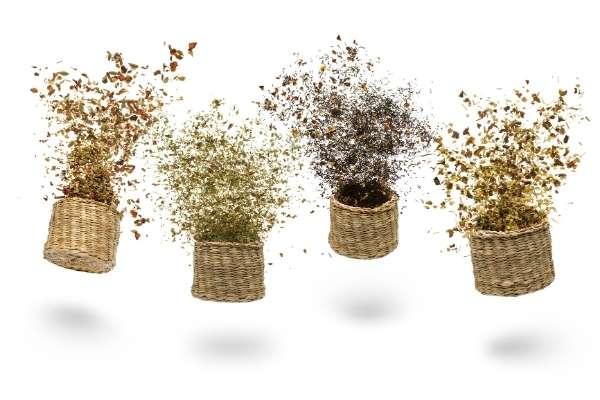 Herbario Infusiones